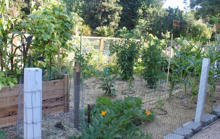 Never Enough Thyme Garden