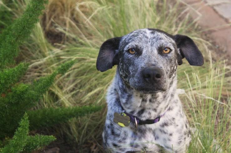 grass awns dogs