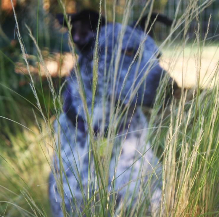Dog grass awns