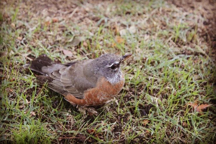 Bird Foraging in Leaf Litter