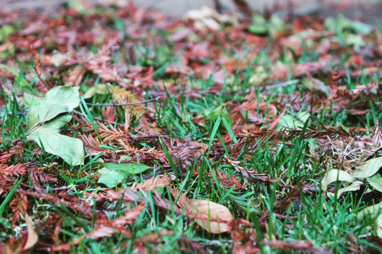 Leaf Litter on Grass