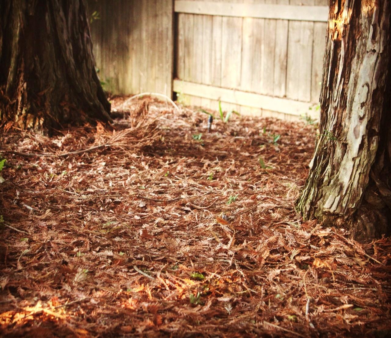 Benefits of Leaf Litter