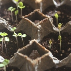 Egg carton seed starting