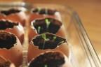 Egg shell seed starting