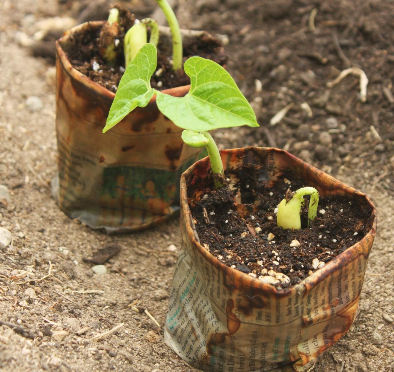 Newspaper Seed Starting Pot