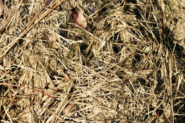 Grass Clippings Tea