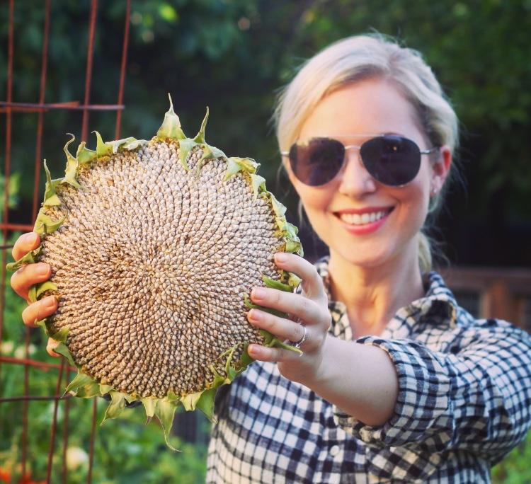How to Grow Mammoth Sunflowers