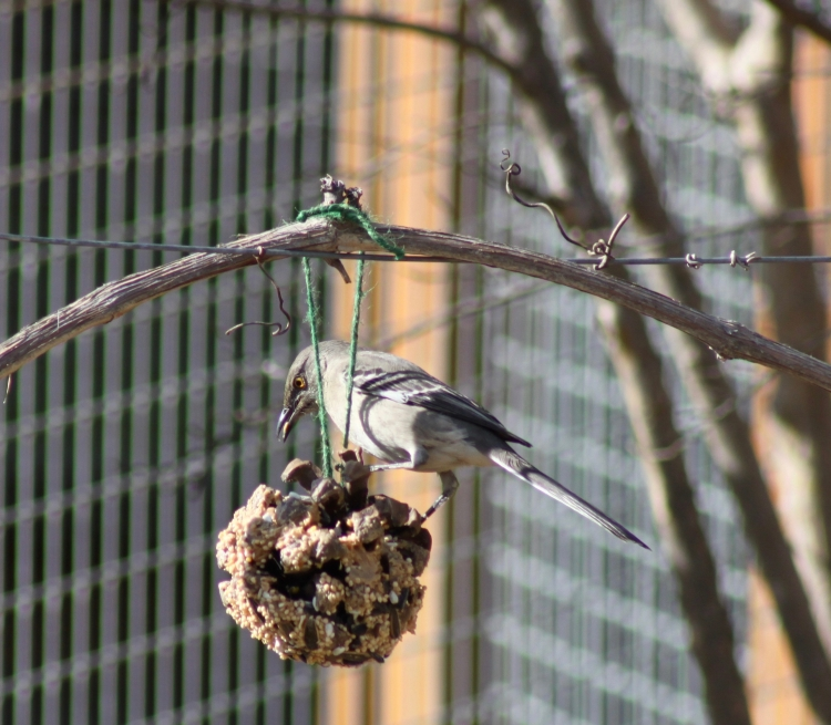 DIY Pinecone Bird Feeder